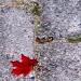 Лист и камни...Осень...