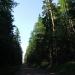 Дороги сквозь лес