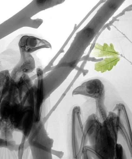 Рентгеновские снимки флоры и фауны Arie van't Riet