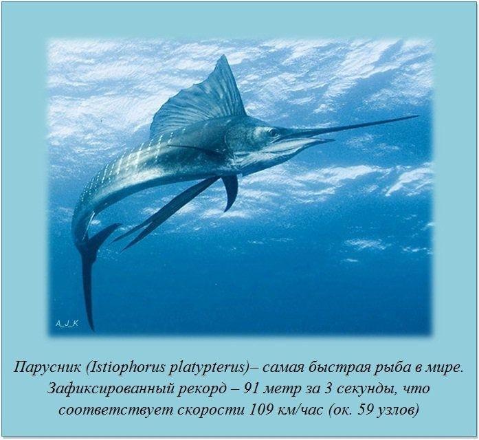 http://img1.liveinternet.ru/images/foto/c/1/apps/4/995/4995681_8.jpg