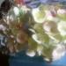гортензия вылеплена из деко каждый цветочек тонирован вручную
