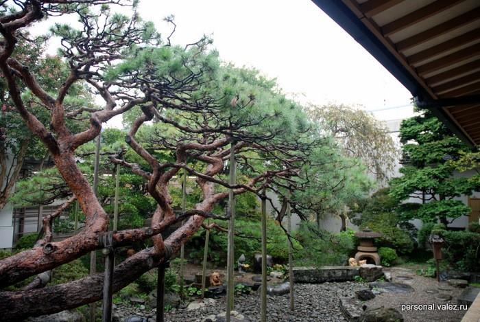 Дворик музея  Милзуки Сигэру, художника манга