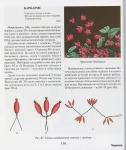 бисероплетение цветы деревья схемы - Ппланета схем.