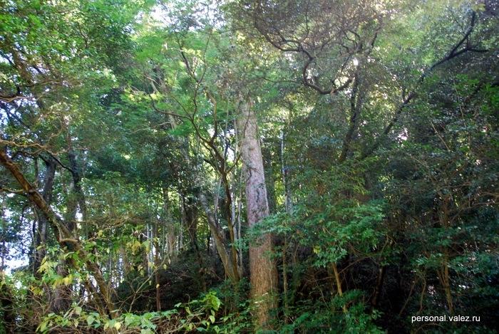 Буйная природа - неотъемлимая часть храмового комплекса