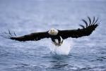 Это изображение расположено в рубрике: удод фото, птицы