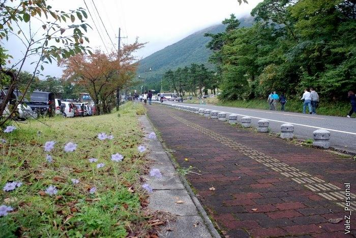 Цветы вдоль шоссе