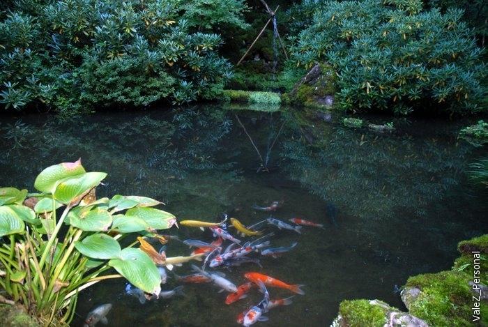 Озерко с разноцветными окунями
