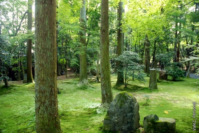 Сад камней в более традиционном понимании
