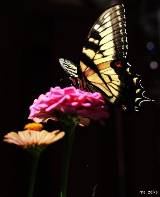 Милый взору цветочек.