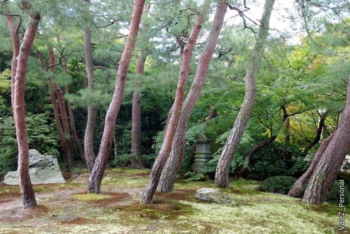 Вышли на улицу, по небольшой части сада можно пройти в чайный домик
