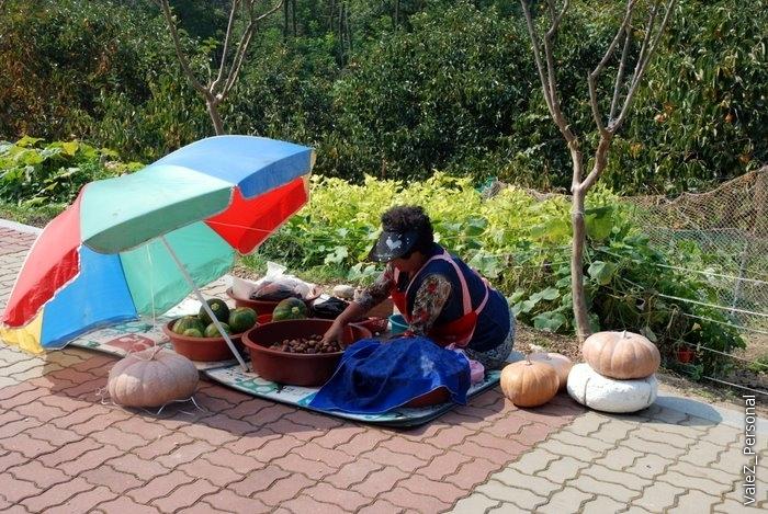 Прям в парке корейцы что-то себе выращивают и хранят. Не продают.