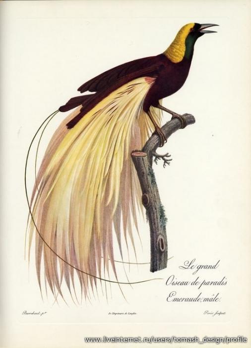 Экзотические птицы ( Альбом из 16 репродукций.