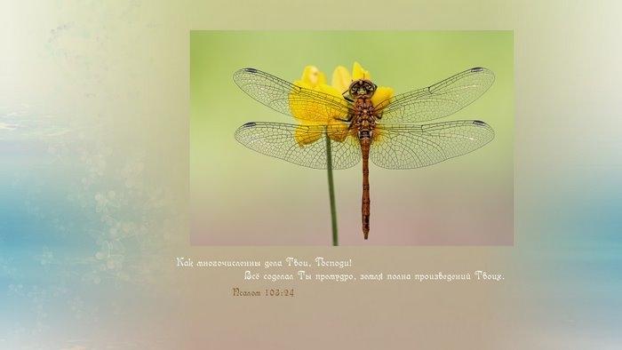 Христианские картинки природа с надписью