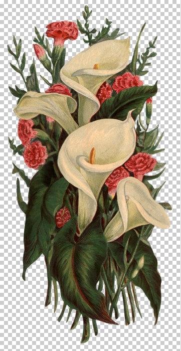 Картинки для распечатки цветы 6