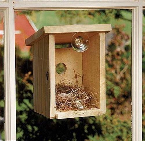 А теперь идея, которая достойна премии за гениальность:Если у вас нет возможности держать дома животное, то при помощи такой несложной конструкции, вы приобретете целое семейство птичек, сможете наблюдать каждый день за происходящим, радоваться появле