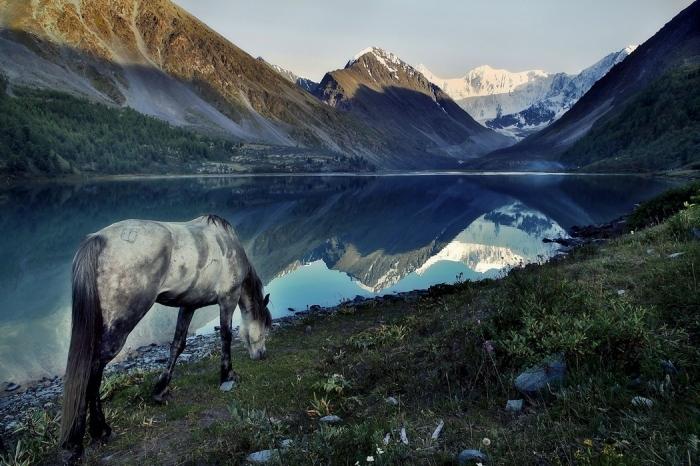 Белый конь на берегу Белого озера у подножия Белой горы