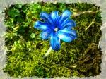 цветик-синецветик 2