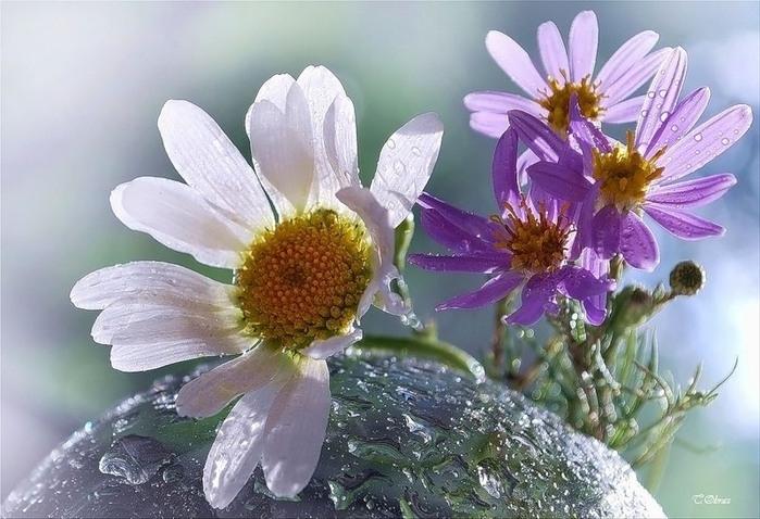 Фото полевых цветов в воде