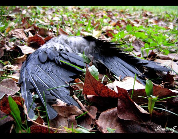 подстреленная птица картинки скелет, чешуя пять