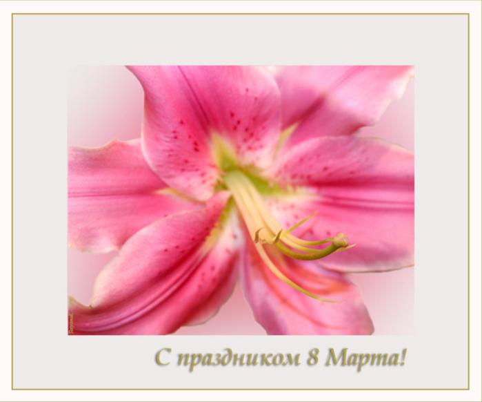 Открытка с 8 марта лилии, пожелания выздоровления