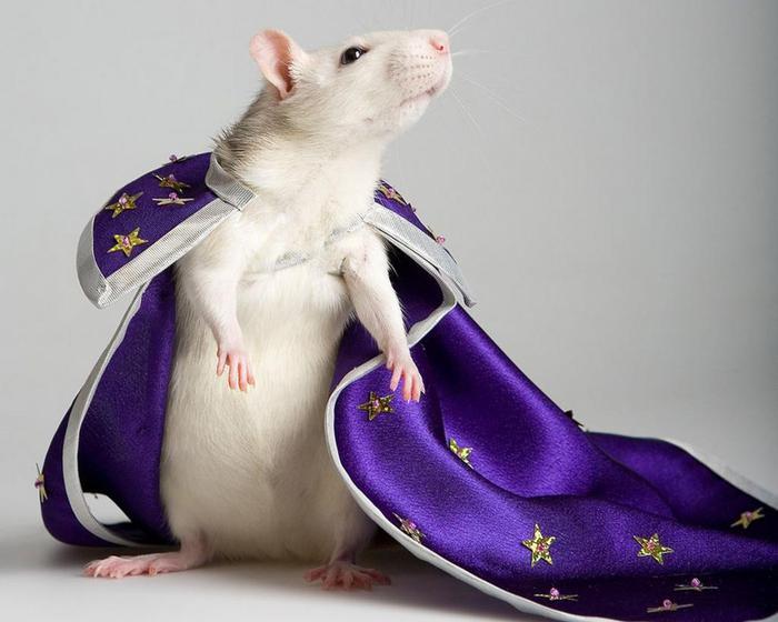 картинки жабы и мышиный король