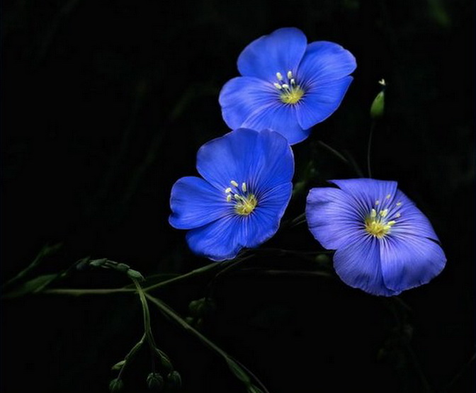 Синие цветы на 93