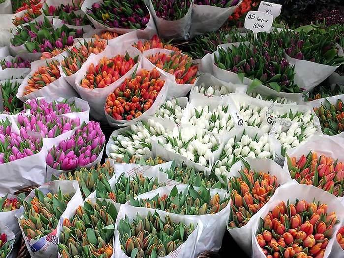 Продажа цветов тюльпан оптом киев, московская продажа цветы