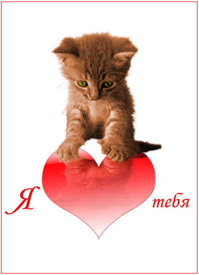 Картинки с надписью мой котенок