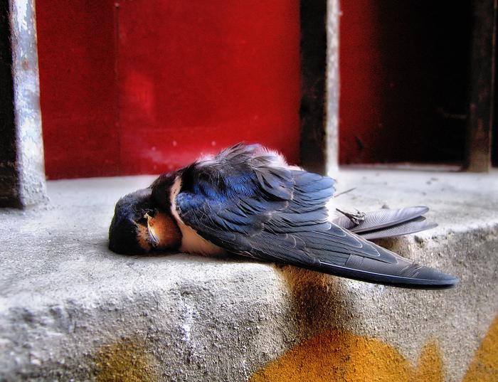подстреленная птица картинки был