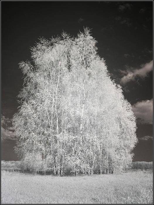 Картинки под стихи белая береза черно-белые