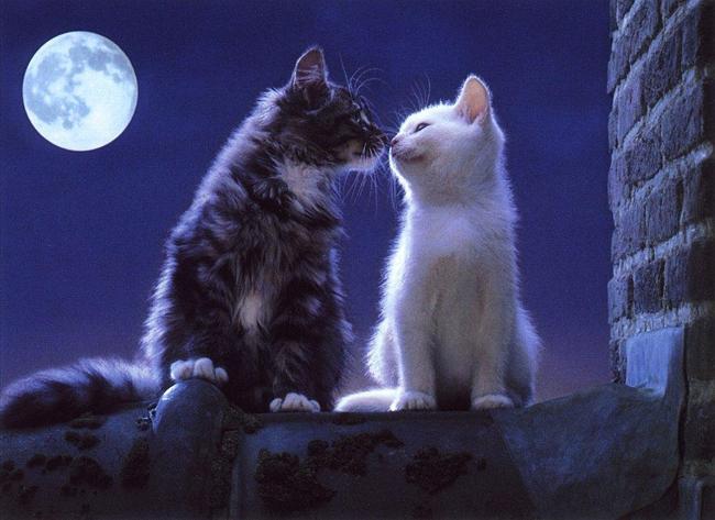 кошка ночь