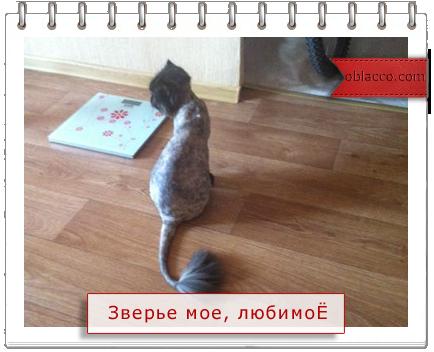 3518263_shynya (434x352, 190Kb)