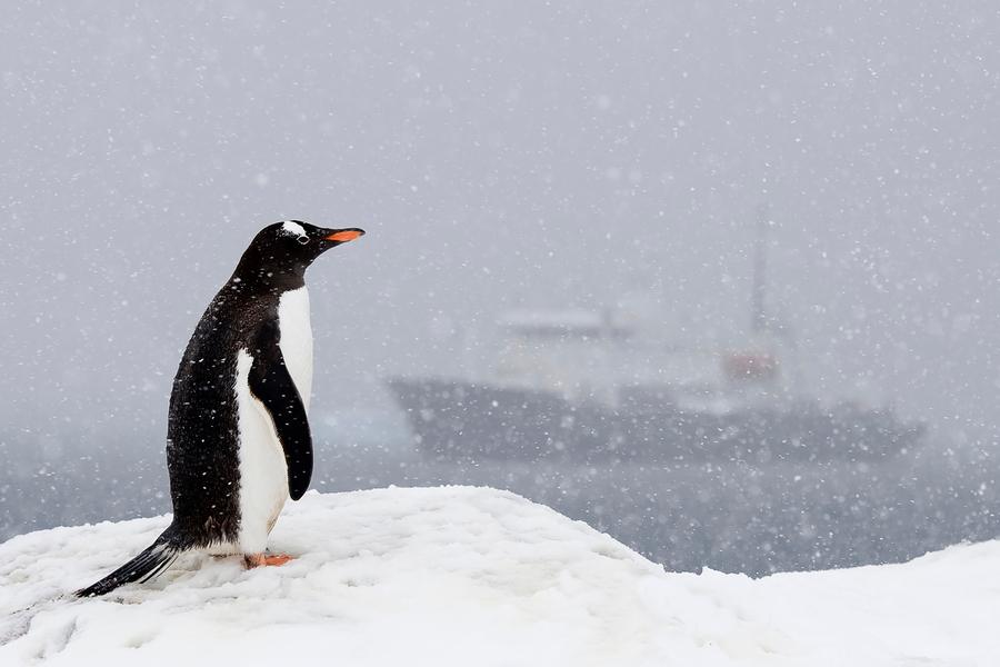 грустный пингвин картинка материал подходит