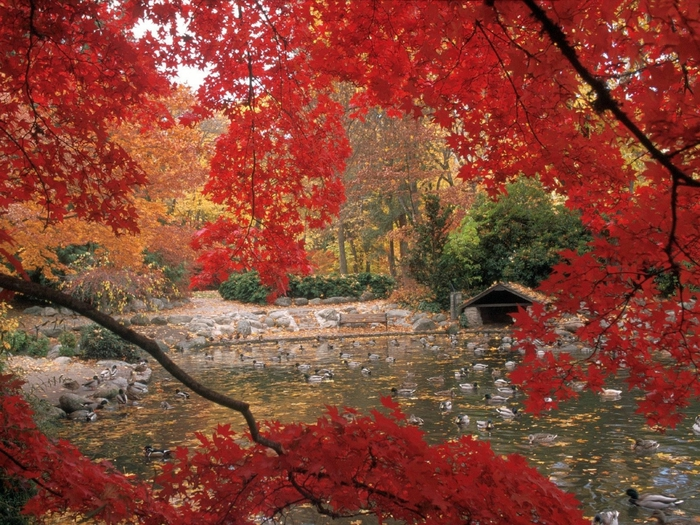 Lithia Park in Autumn, Ashland, Oregon (700x525, 380Kb)