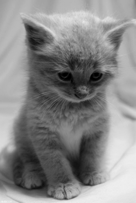 2795685_3_adorable_cute_little_kitty (469x700, 123Kb)