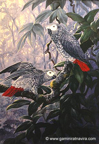 congo courtship (319x467, 156Kb)