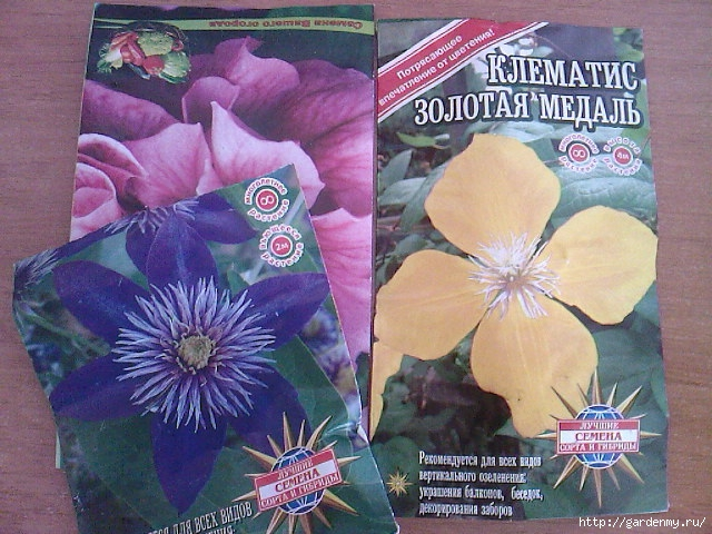 Как вырастить клематис из семян