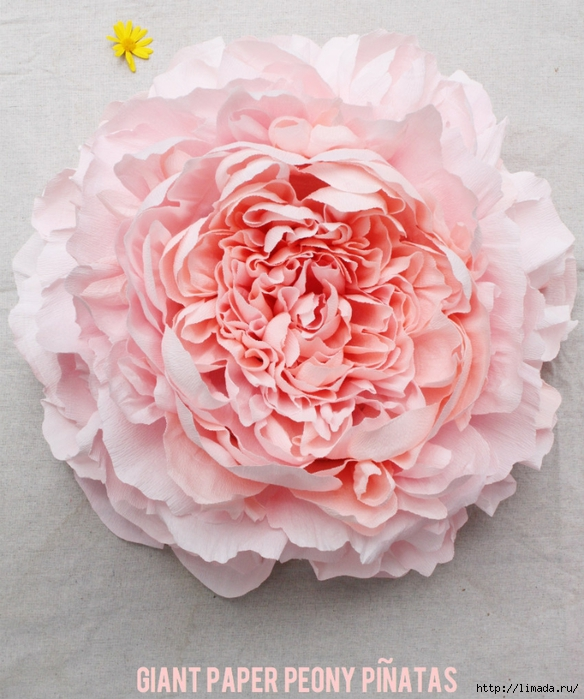 peonycover850croppedLABELED (584x700, 304Kb)