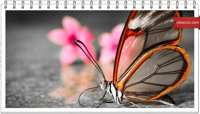 Бабочка - заколка для волос своими руками. Мастер класс/3518263__2_ (700x400, 407Kb)/3518263__2_ (700x400, 406Kb)