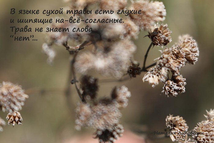 grasses text1 (700x466, 68Kb)