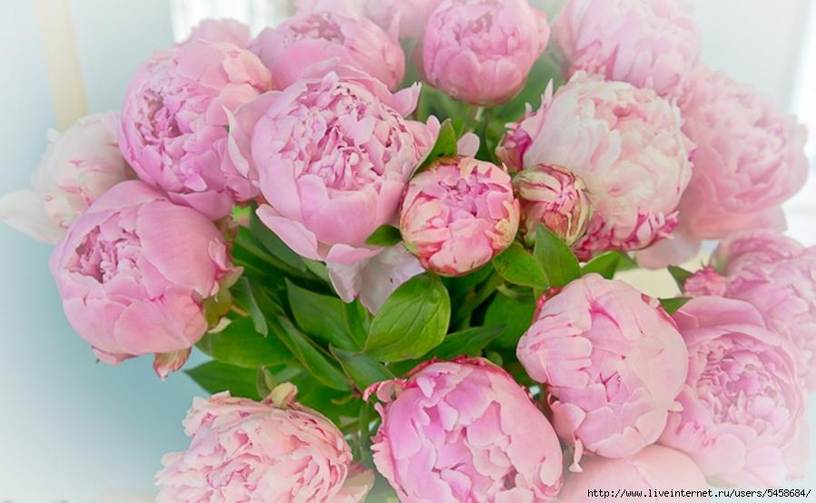 Открытки своими, картинка с днем рождения женщине цветы пионы