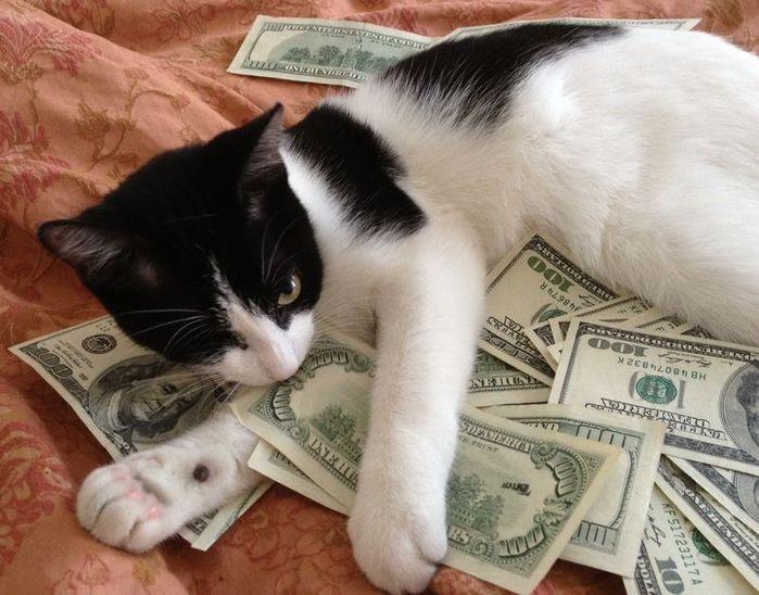 Деньги прикольные фото картинки, открыток года