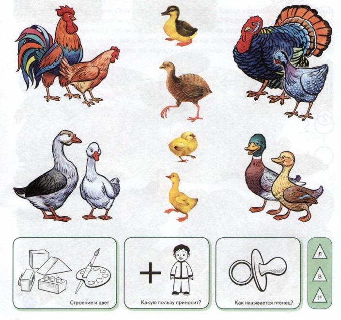 Домашние птицы картинки для малышей