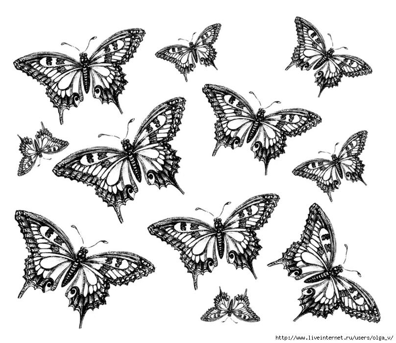 Бабочки черно-белые картинки