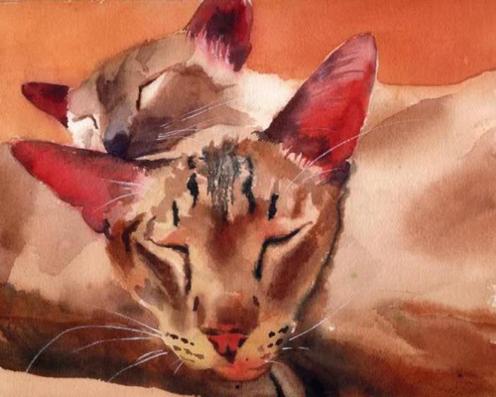 Кошачьи акварели Rachel Parkerx_2cb25bf7 (700x560, 112Kb)