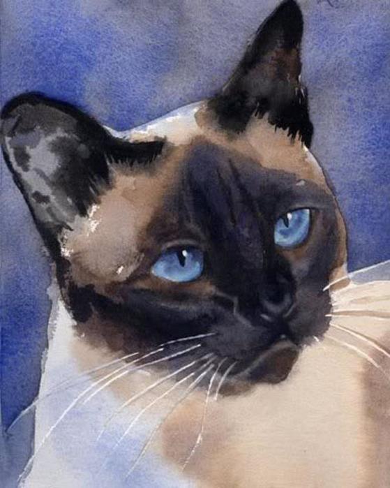 Кошачьи акварели Rachel Parkerx_66e850f2 (559x700, 105Kb)