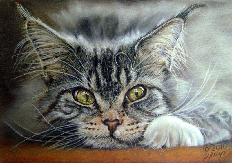 знакомства для кошек спб