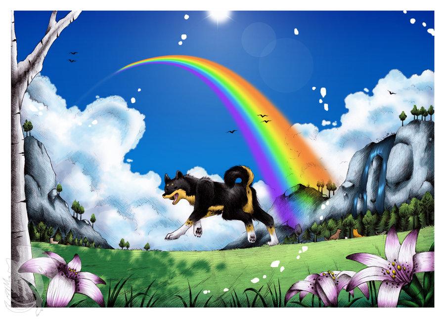 радуга собак картинки первые