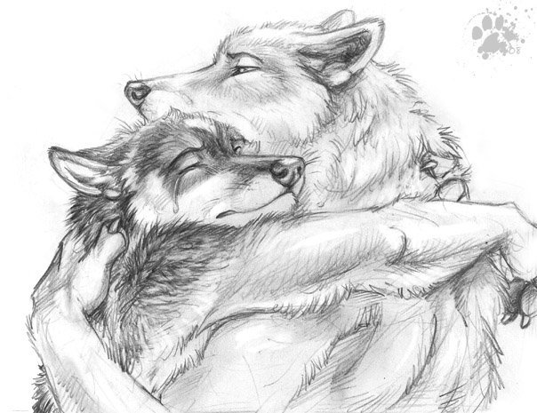рисунки волки картинки