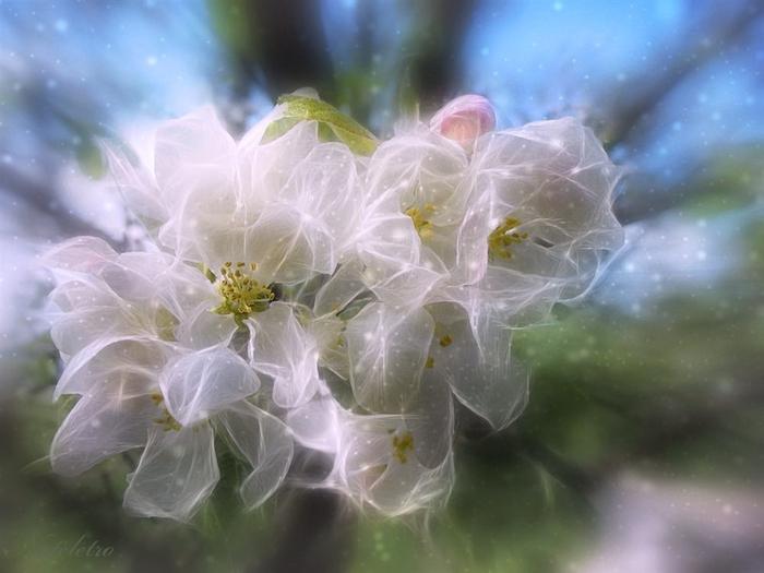Картинки по запроÑу фантаÑтичеÑкие цветы